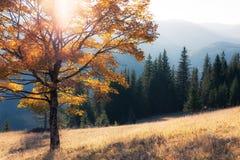 Fall colors tree Stock Photos