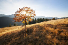 Fall colors tree Royalty Free Stock Images