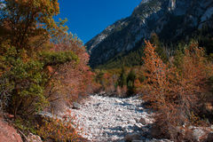 Fall colors of Utah Royalty Free Stock Images