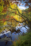 Fall Colors. A vibrant display of autumn color on a clear cool day Royalty Free Stock Images