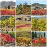 Fall colors vineyards collage Royalty Free Stock Photos