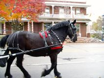 Carriage horse with fall colors and vintage building background. Carriage horse with fall colors and vintage building in background royalty free stock image
