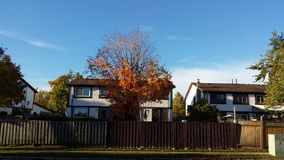 Fall Colors. Walking down the street in Meadowvale, Mississauga, Canada, I saw these house with lots of colored trees Stock Image