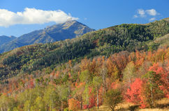 Fall colors in the Wasatch Mountains. Stock Photos