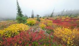 Fall Colors in Washington, USA Stock Photo