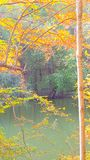 Fall colors by water. Beauty Royalty Free Stock Photography