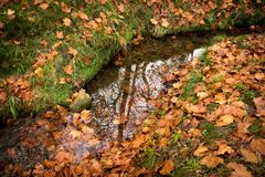 Fall colors, water, brown and green Royalty Free Stock Images