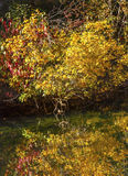 Fall Colors Water Reflection Abstract Wenatchee River Washington Royalty Free Stock Images