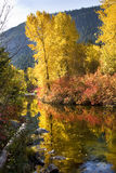 Fall Colors Wenatchee River Washin Royalty Free Stock Photo