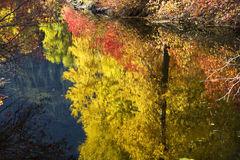 Fall Colors Wenatchee River Washington Stock Image