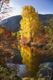 Fall Colors Wenatchee River Washington Stock Photo
