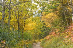 Fall Colors on a Western Mountain Trail Stock Photos