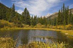 Fall Colors wilderness. Small pond in the high country of Indian Peaks Wilderness west of Boulder Colorado Royalty Free Stock Photo
