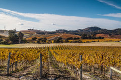 Fall colors in the wine county. Colorful landscapes of vines during autumn month in the wine county, Napa California Royalty Free Stock Images