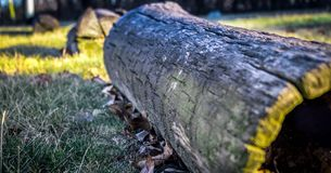 Fall Colors. Wooden Log on a cold wintery day Royalty Free Stock Images