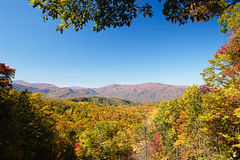 Fall colors woods in the Smoky Mountains National Park Royalty Free Stock Images