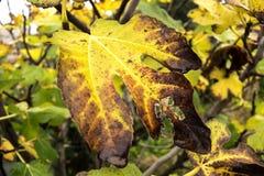 Fall colors, yellow Stock Photos