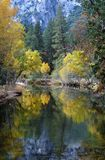 Fall colors in Yosemite, California. Fall colors surround a slow moving river in Yosemite, California royalty free stock image