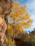 Fall Colors at Zion Stock Photo
