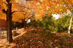 Fall Colors at the Zoo. This is a Fall picture taken at Chicagos iconic Lincoln Park Zoo, established in 1868, is one of the oldest Zoos in the United States Stock Photo