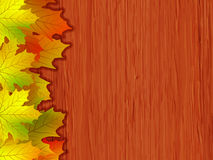 Fall coloured leaves. EPS 8  file included Royalty Free Stock Photography