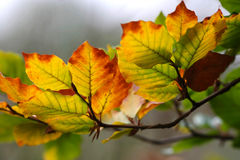Fall colours. Seasonal colours in the forest royalty free stock photography
