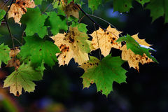 Fall colours. Seasonal colours in the forest stock images