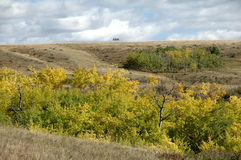 Fall colours. Prairie landscape during fall in alberta, canada Stock Photo