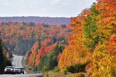 Fall Colours in Algonquin Park Ontario. A Fall view along Highway 60 in Algonquin Provincial Park, Canada's oldest provincial conservation park. It is early stock image