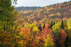 Fall colours in the Eastern Townships royalty free stock photos