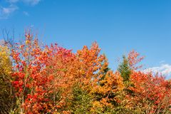 Fall colours in the Eastern Townships Stock Images
