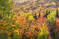 Fall colours in the Eastern Townships in Quebec royalty free stock photo