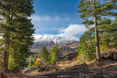 Fall colours on Etna Volcano, Sicily Royalty Free Stock Image