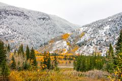 Fall colours and first snow. Overcast day, Kananaskis, Alberta, Canada Royalty Free Stock Images