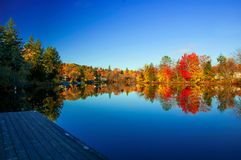 Fall colours foliage with boardwalk on a lake. Fall colours treeline on the horizon with still calm water with a boardwalk on the shore Stock Photos