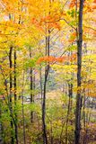 Fall colours in a forest in Ontario, Canada stock photos