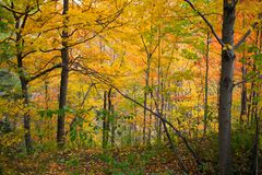 Fall colours in a forest in Ontario, Canada stock photo