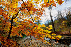 Fall colours Stock Photography