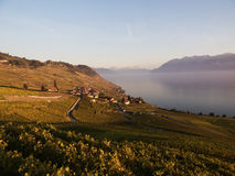 Fall Colours in Lavaux At Dusk Royalty Free Stock Photos