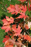 Fall colours Stock Photo