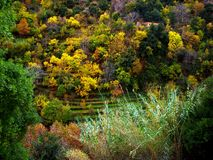 Fall Colours in Lebanon Stock Photography