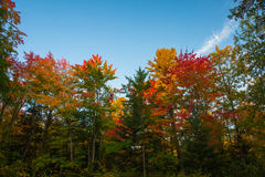 Fall Colours Royalty Free Stock Photo