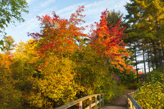 Fall Colours Royalty Free Stock Image