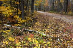 Fall colours in Ontario Canada giant oak trees stock image
