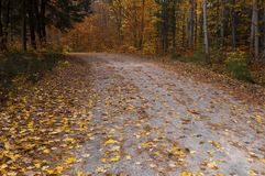 Fall colours in Ontario Canada giant oak trees royalty free stock photography