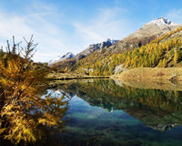 Fall Colours Reflecting In Mountain Lake Royalty Free Stock Photos