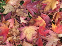 Fall Colours Stock Image
