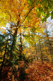 Fall colours Royalty Free Stock Photography