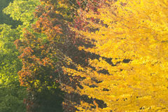 Fall Colours Transition Stock Photos