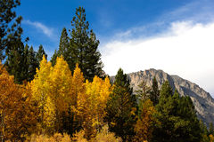 Fall Comes To The Eastern Sierra's Royalty Free Stock Image